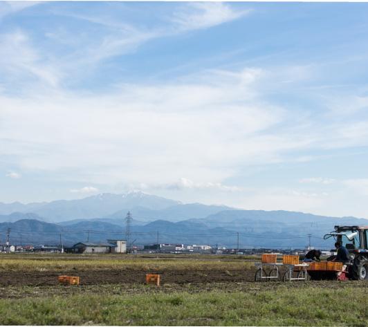 手取川の水源である霊峰白山を望む岡元さんの畑