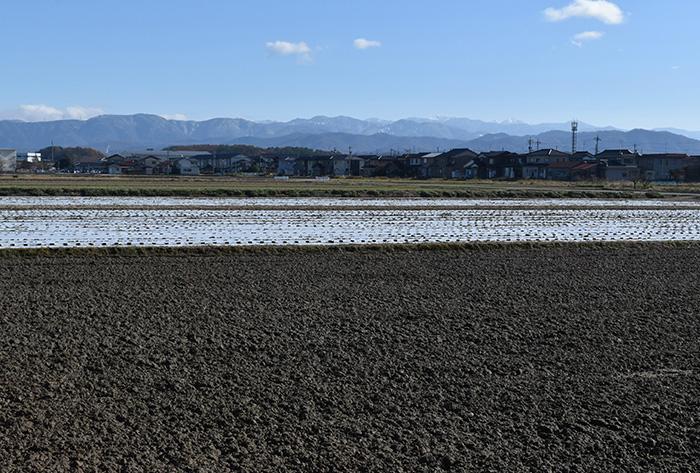 今秋まで「加賀丸いも」が作られていた畑